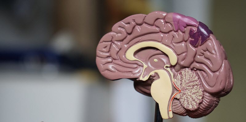 insan-beyni-vs-yapay-zeka
